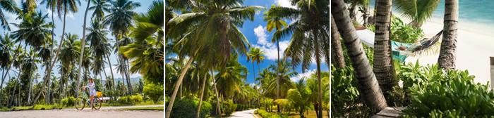 La Digue's coconut plantation.